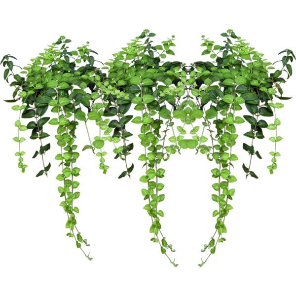0 86c09 Aaaaa55e Xl Png Plant Painting Plants Photoshop