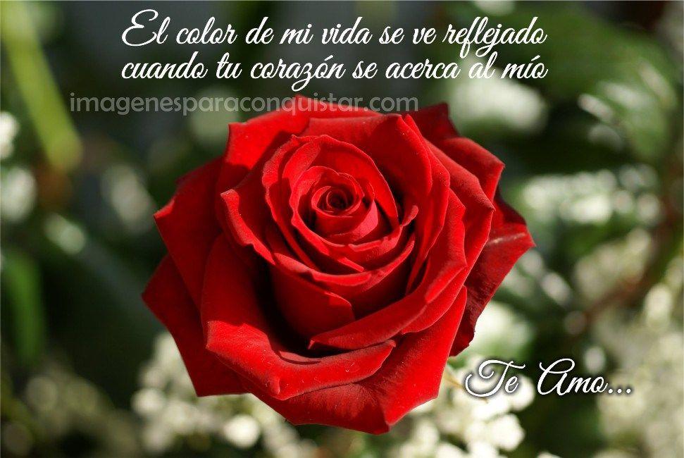 Imagenes De Rosas Con Versos De Amor Para Ella Hybrid Tea Roses Types Of Roses Tea Roses