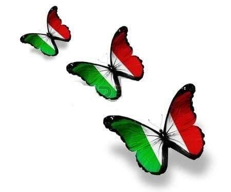 Pin On Dragonflys Butterflys Moths