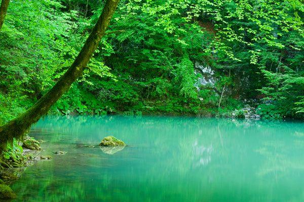 Het Risnjakgebergte - KROATIË  Met een hoogste punt dat 'amper' 1.528 meter boven de zeespiegel ligt, is de Veliki Risnjak de perfecte bergtop die het hele jaar door beklommen kan worden. Ook meer ervaren wandelaars laten zich bekoren door deze regio, al was het maar door de diverse flora en fauna.