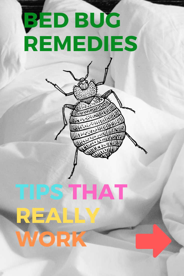 How To Get Rid Of Bed Bugs Fast And For Good Simple Steps And