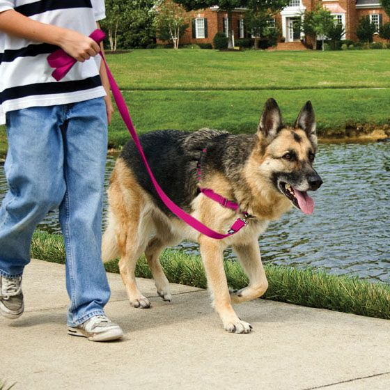 One Of The Best And Easiest Ways To Train A Dog To Walk On A Leash