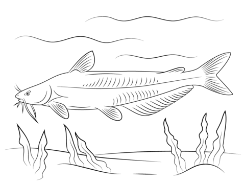 Blue Catfish Coloring Page Free Printable Coloring Pages Free Printable Coloring Pages Coloring Pages Fish Coloring Page