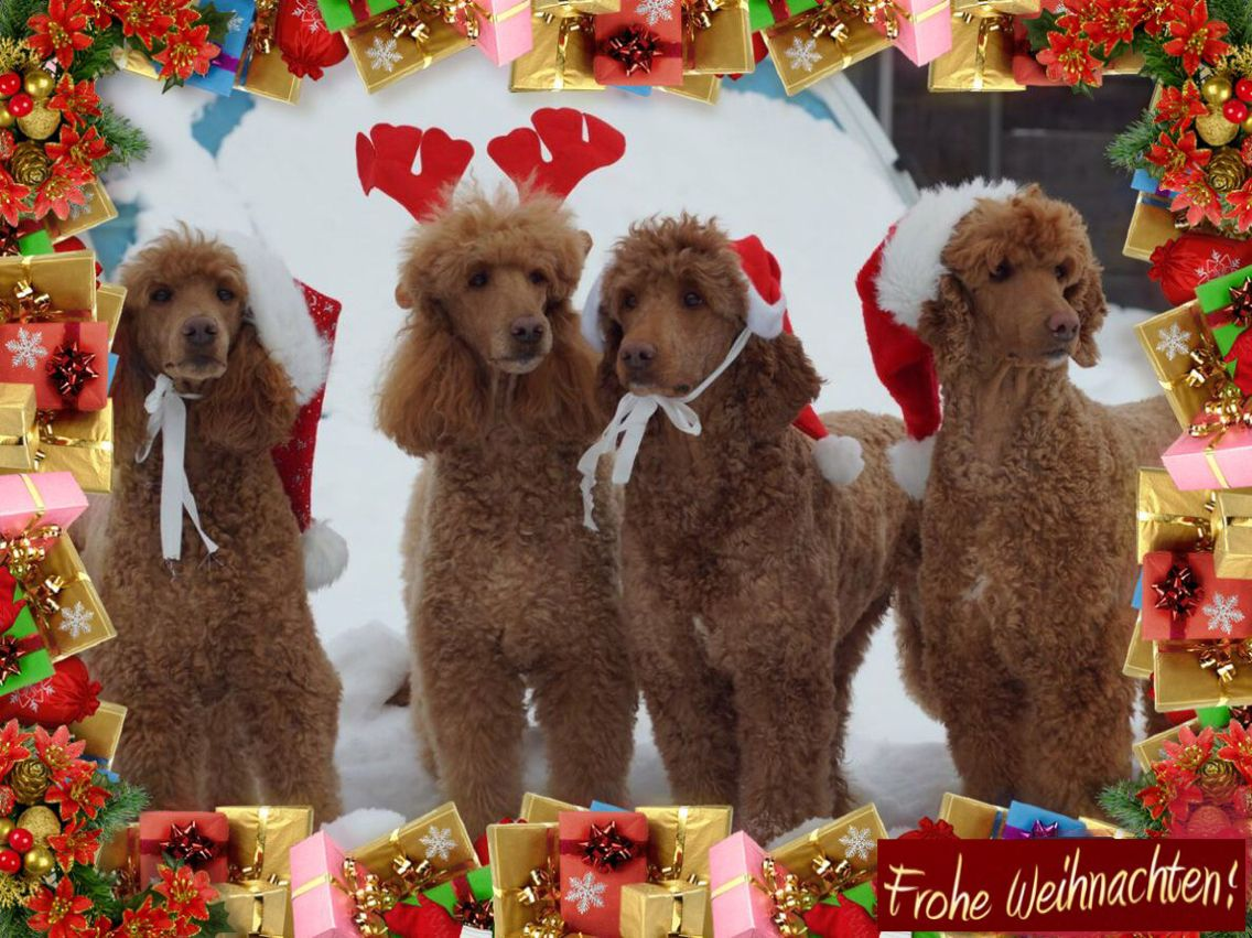Frohe Weihnachten und einen Guten Rutsch ins neue Jahr ...