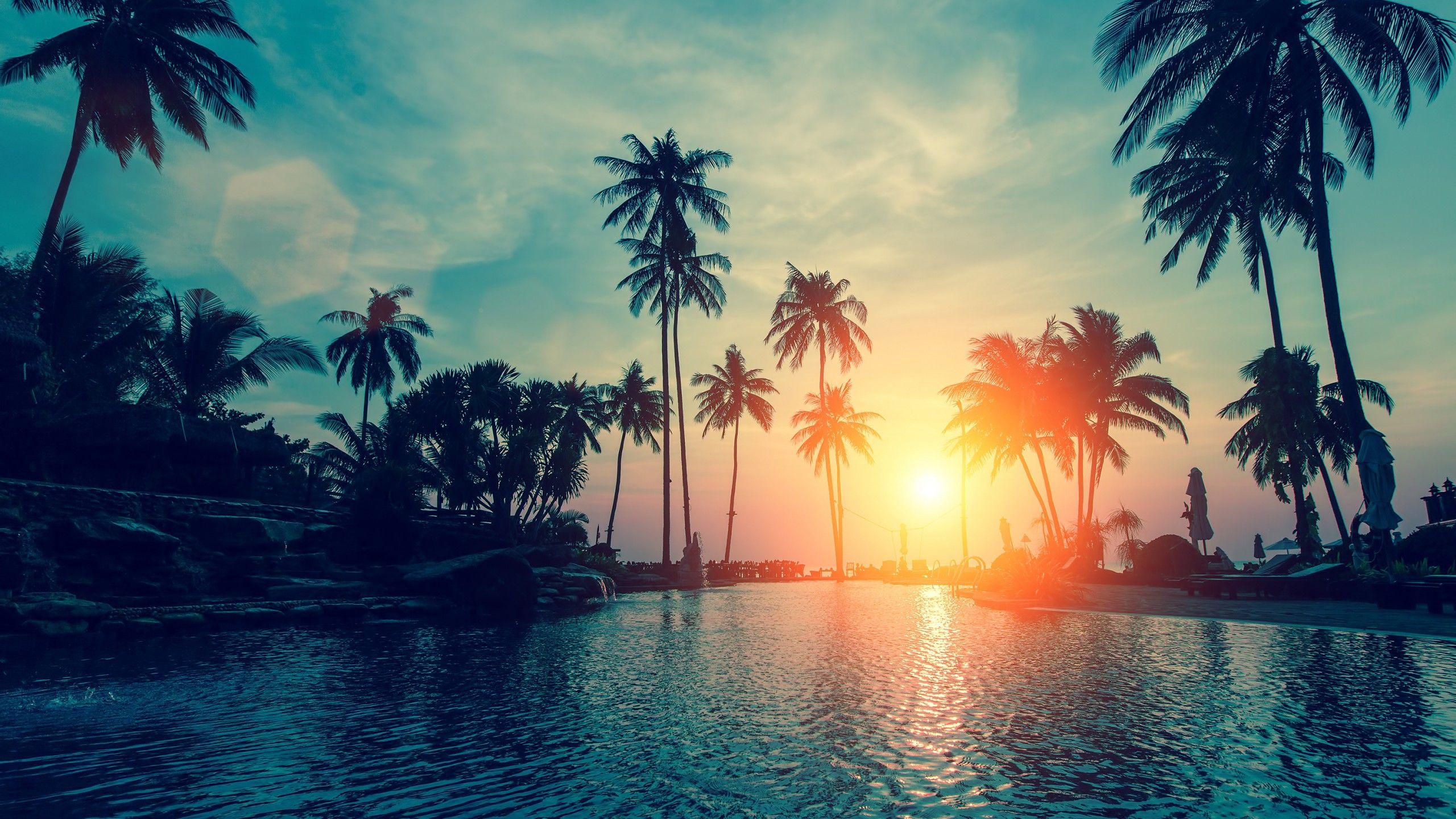 Sunset 2560x1440 Palm Trees Tropical Beach Hd Media File Pixelstalk Net Palm Trees Wallpaper Tree Hd Wallpaper Sunset Wallpaper