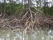 A función de relación nas plantas Hidrotropismo #plants #world #life... |  Bioma, Raiz de arbol, Manglares