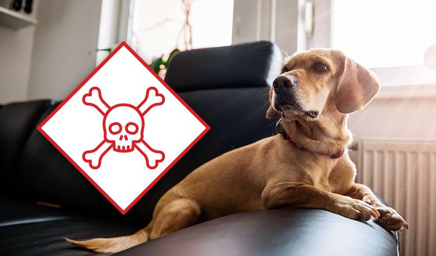 5 LesserKnown Pet Poisons Right in Your Home
