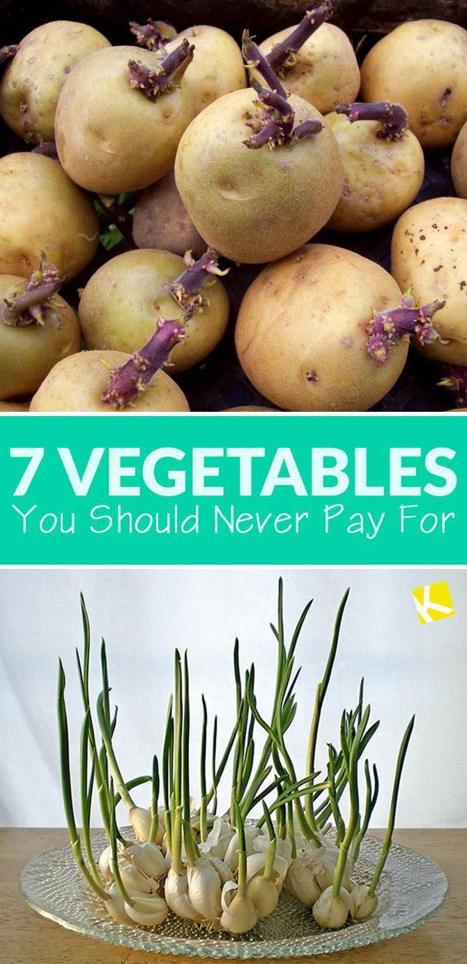7 Vegetables You Should Never Pay For is part of garden Decking Cheap - Stop throwing away your vegetable scraps — you can grow a garden out of them! Seriously  Follow these steps to get cheap, healthy produce for free