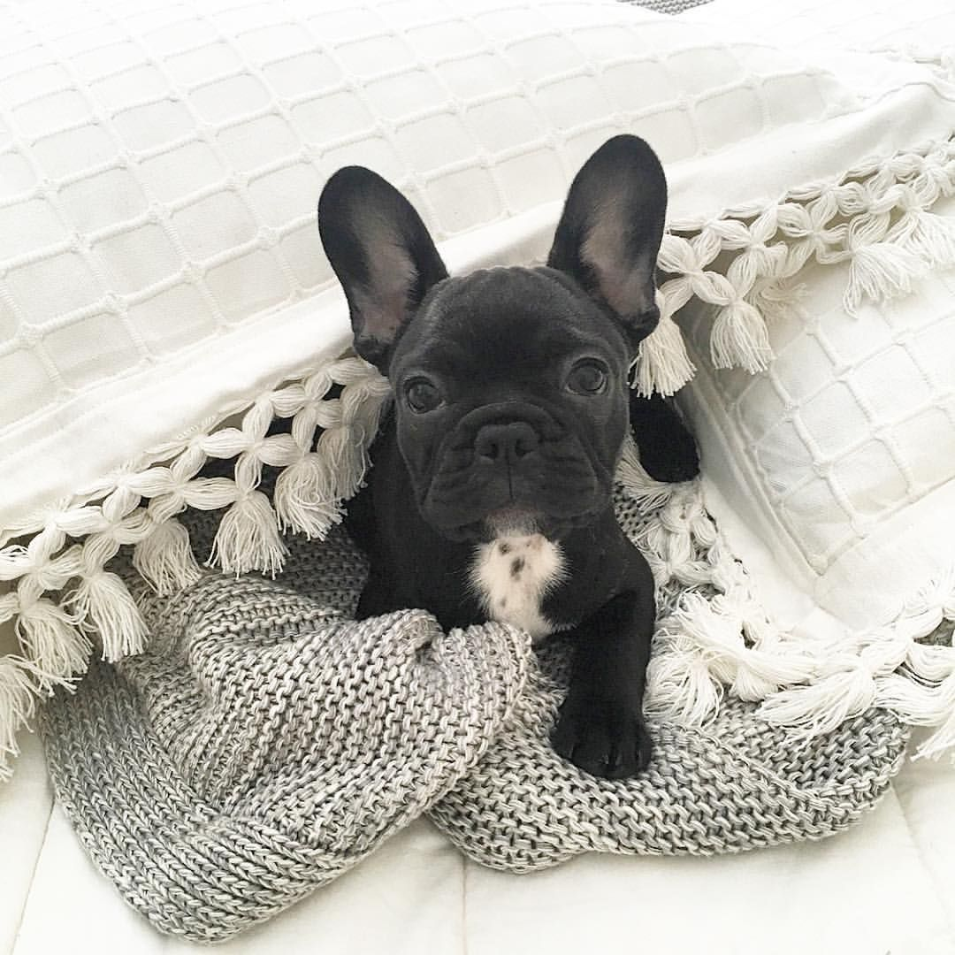 The 25+ best Puppy sweaters ideas on Pinterest
