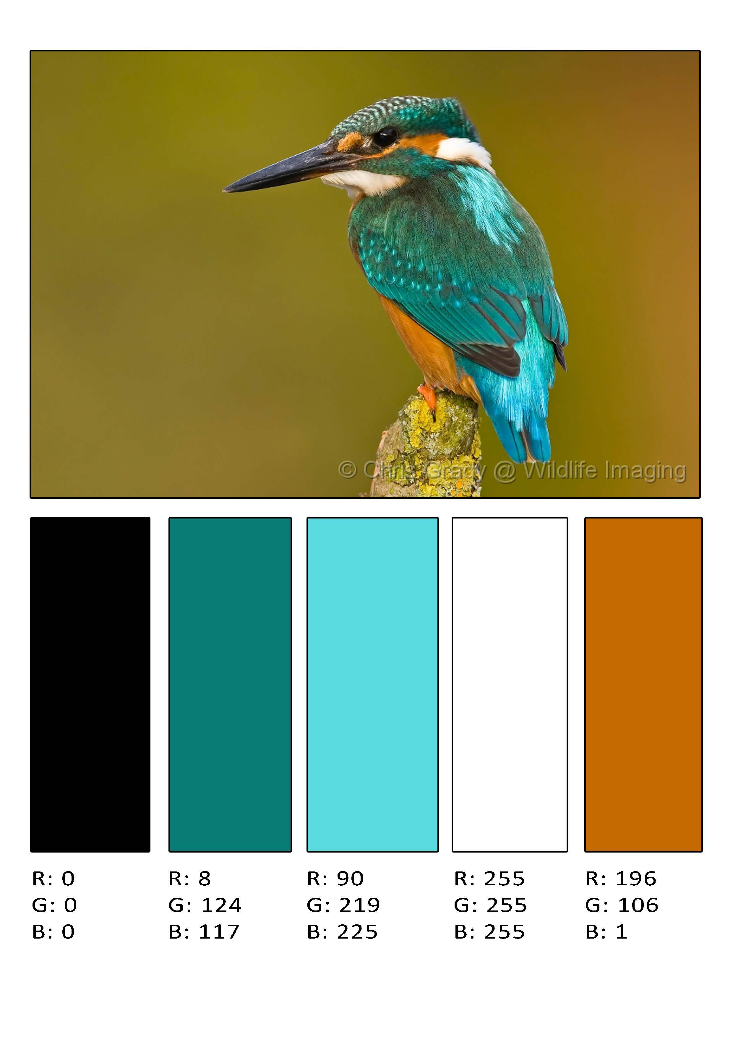 Color Palette 1 Kingfisher Pinterest Color Color Inspiration