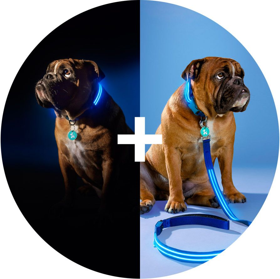 led products basic flashing poochlight dog illuminating budget up electric squeaker blue collar light