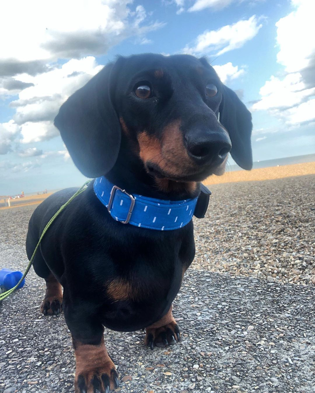Dachshund Products Apparel And Gifts Weenie Dogs Dachshund