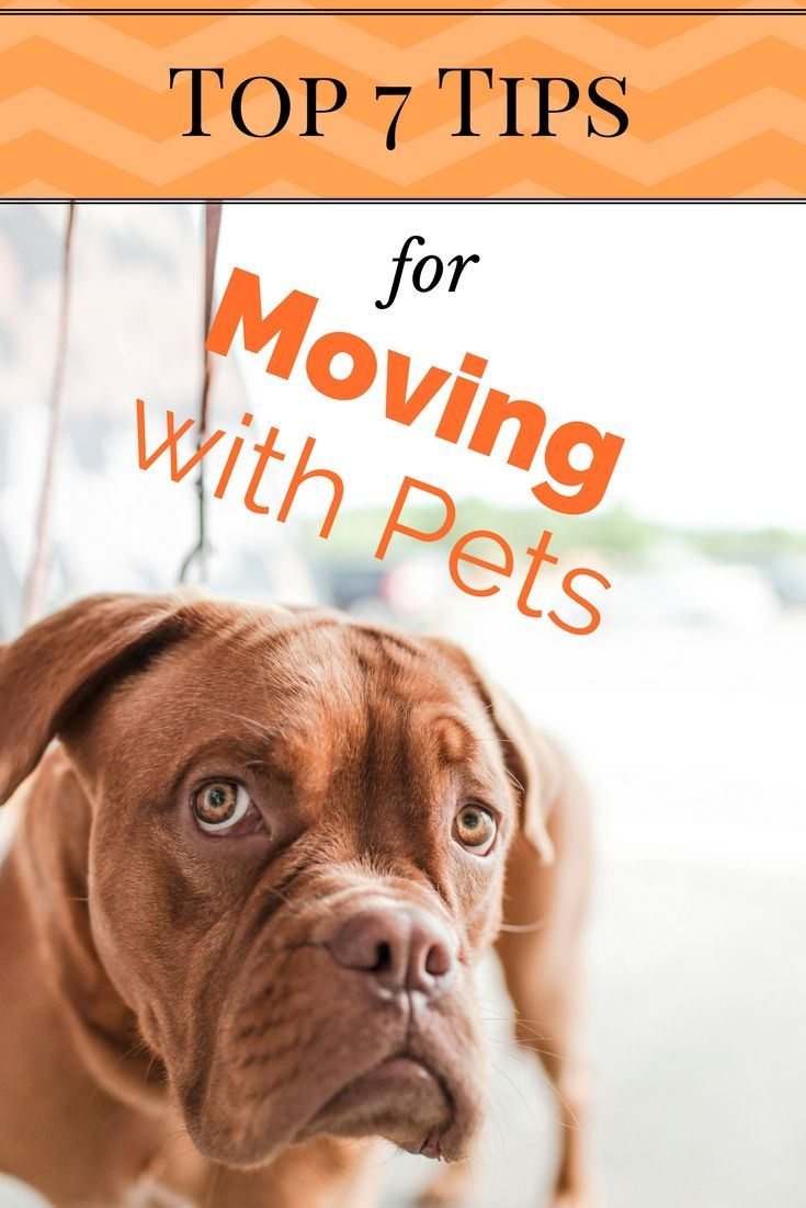 Top 7 Tips For Moving With Pets Keep Them Safe And You Efficient