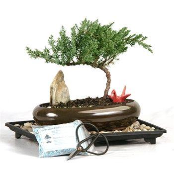 Oval Juniper Crane Gift Set From Easternleaf Com Juniper Bonsai Bonsai Tree Bonsai