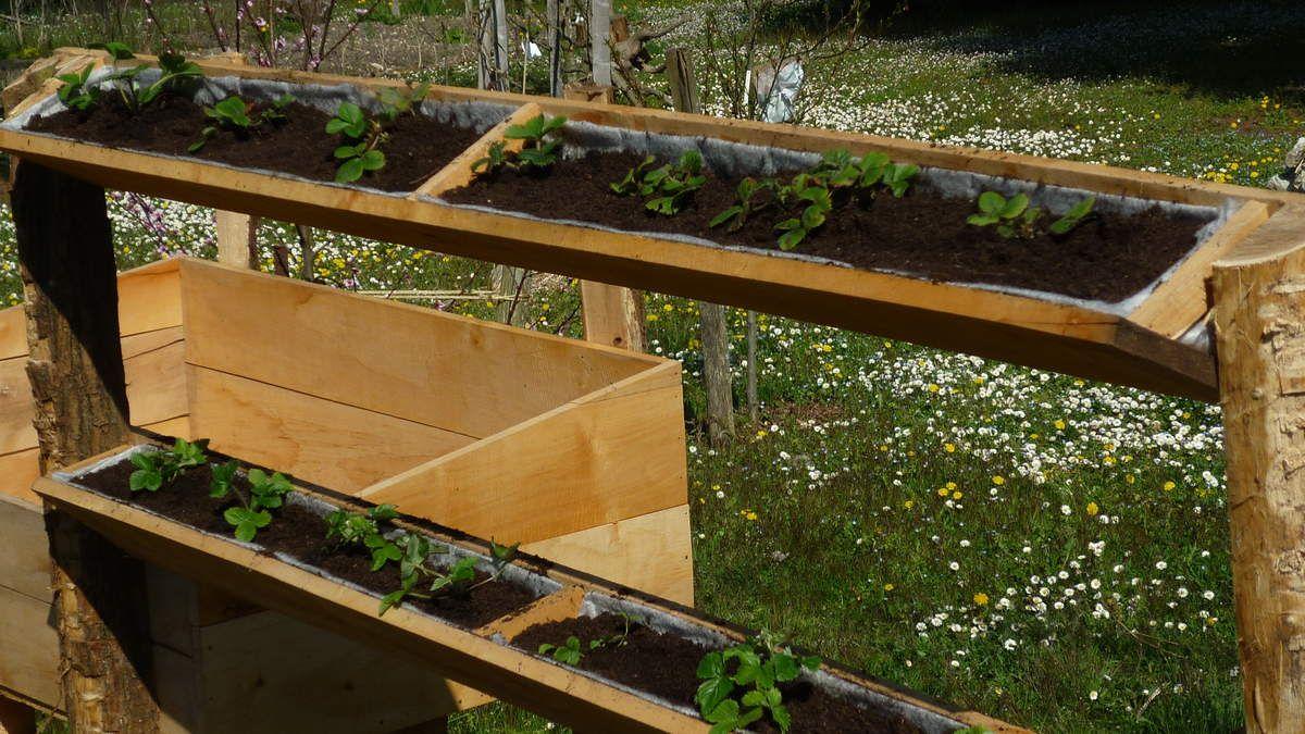 et les fraisiers investissent le mur de fraise jardins pinterest fraisier fraise et mur. Black Bedroom Furniture Sets. Home Design Ideas