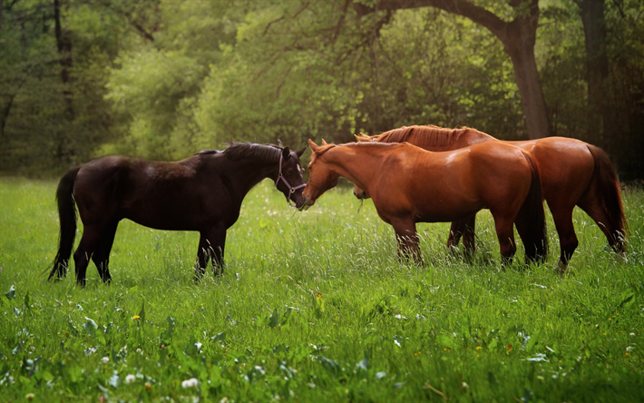 Download Wallpapers Horse Herd Forest Green Field Green Grass Brown Horses Besthqwallpapers Com Cheval Animaux Foret