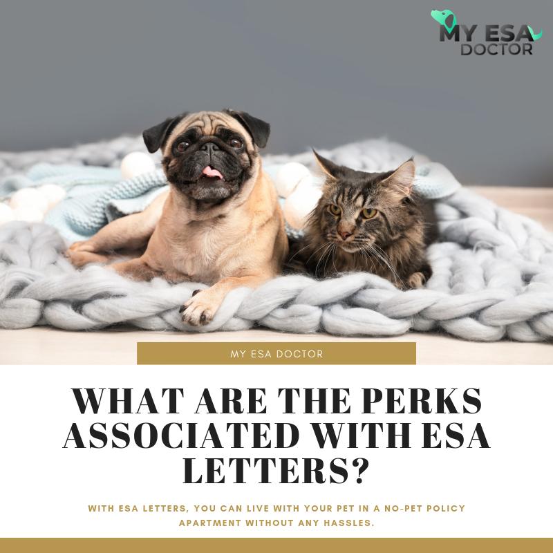 Emotional Support Animal Letter For Your Animal Esa Letter Find