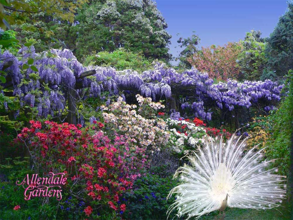 beautiful gardens pictures - yahoo! search results | gardens