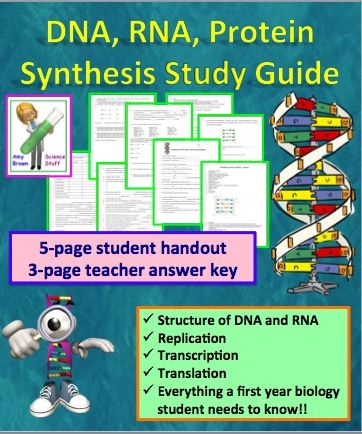 Dna rna protein synthesis worksheet study guide student dna rna protein synthesis worksheet study guide fandeluxe Images