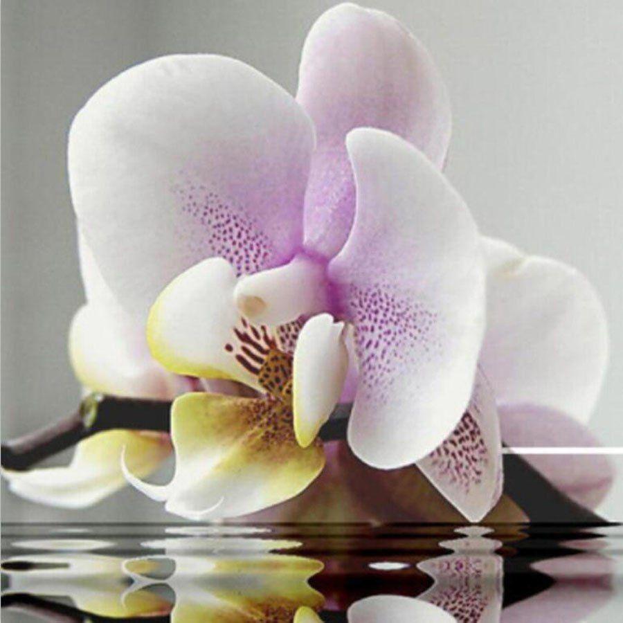Орхидеи фото цветов открытки, рождение