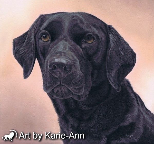 e1d5a8eb094b Black labrador dog painting in pastel from the studio of Art by Karie-Ann.  Creator of beautiful custom pet portraits and animal art.