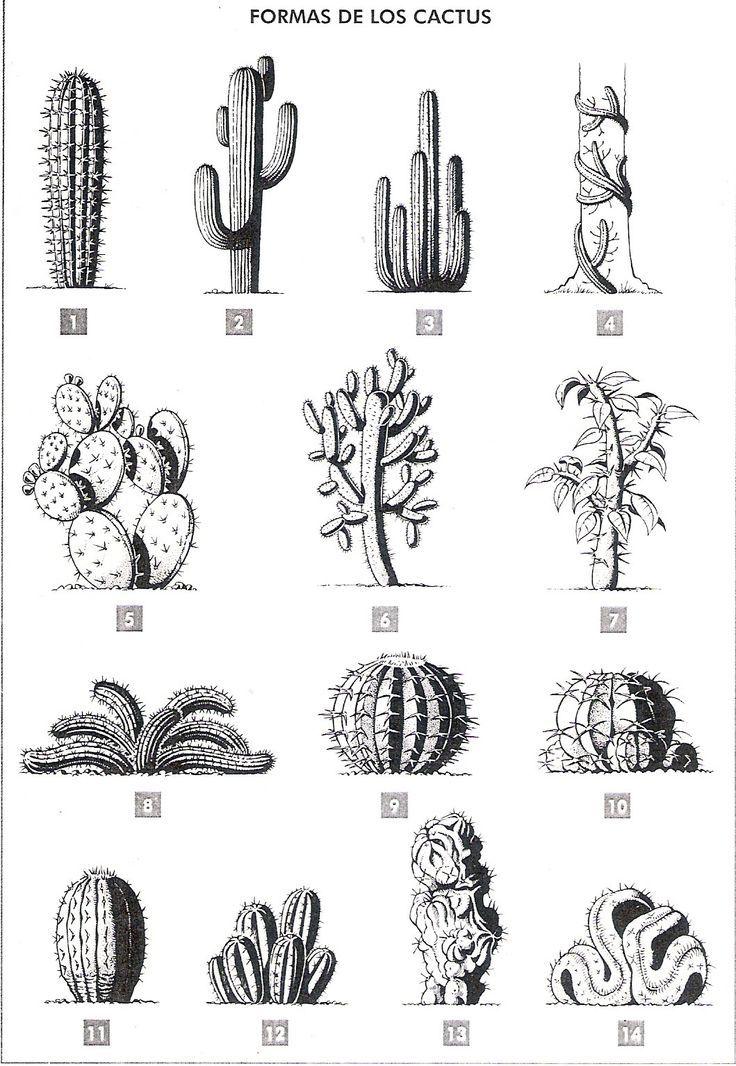 # Pferd Freiheit #cactus #formas #cactuswithflowers