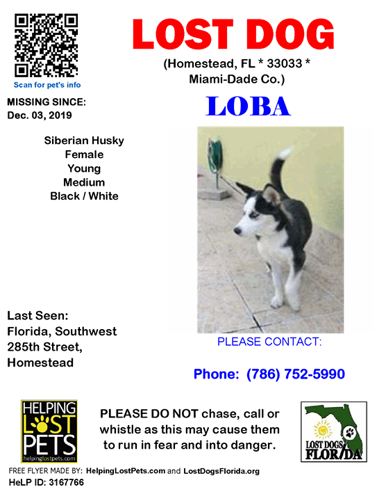 Lost Dog Have You Seen Loba Lostdog Loba Homestead Florida Southwest 285th Street Homestead Fl 33033 Miami Dade Co Losing A Dog Dogs Losing A Pet