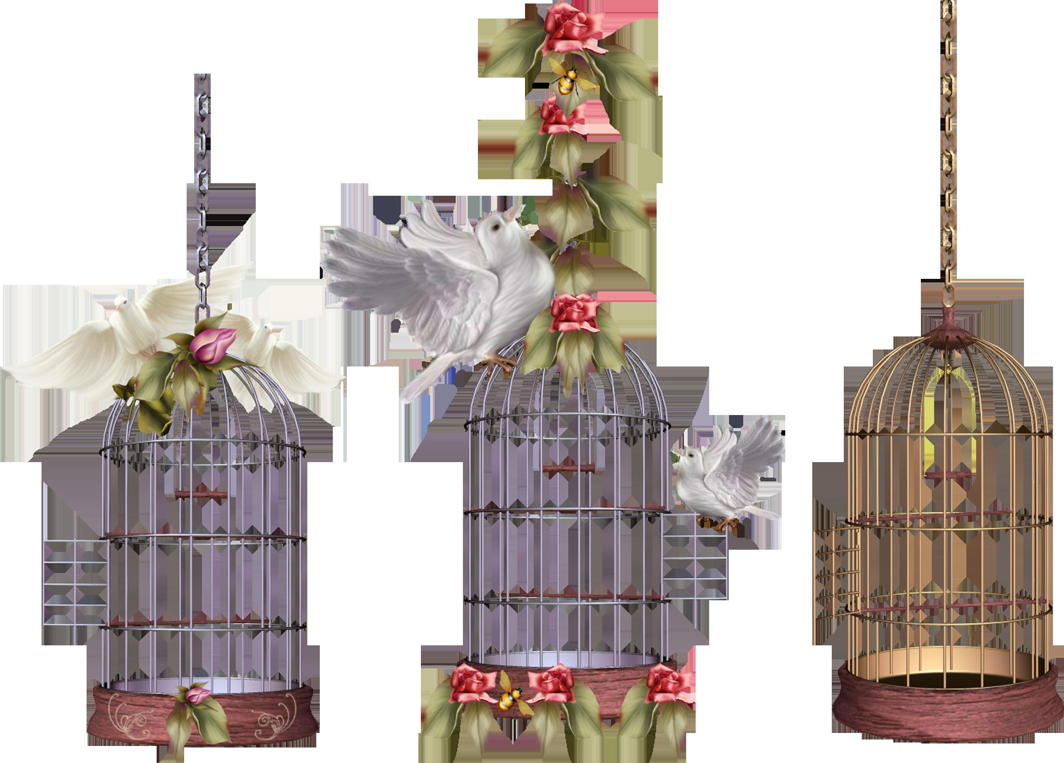 White Bird Cage Png Image Bird Cage Bird Painting Diy Bird Cage Decor