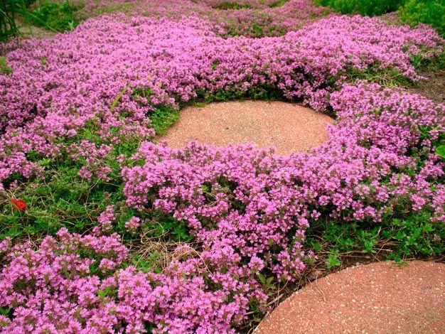 Plantas perfectas para sembrar en un camino de jardín caminos - plantas para jardin