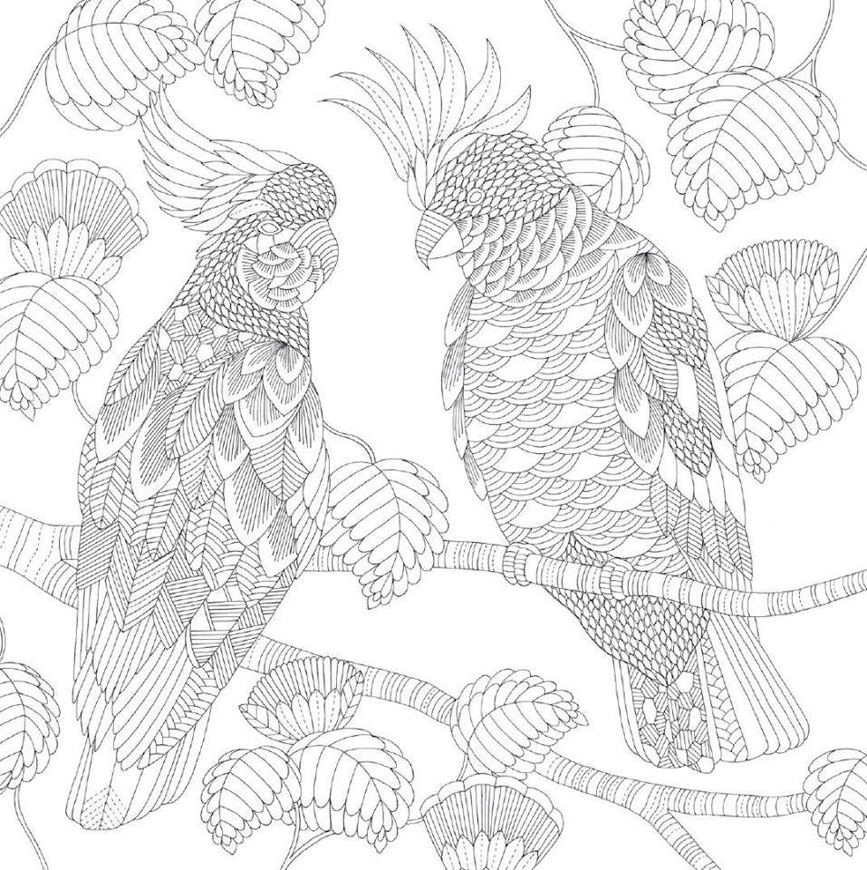 Pin de özgür öztürk en Bird Coloring Pages | Pinterest | Cacatuas ...