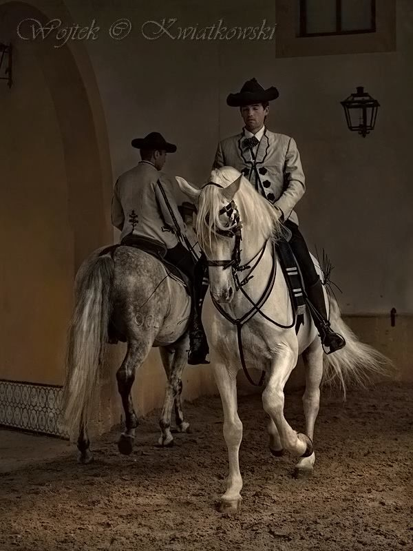 Wojtek Kwiatkowski Equine Photography S Wojtek Kwiatkowski Equine Photography Horses Andalusian Horse Horse Dance