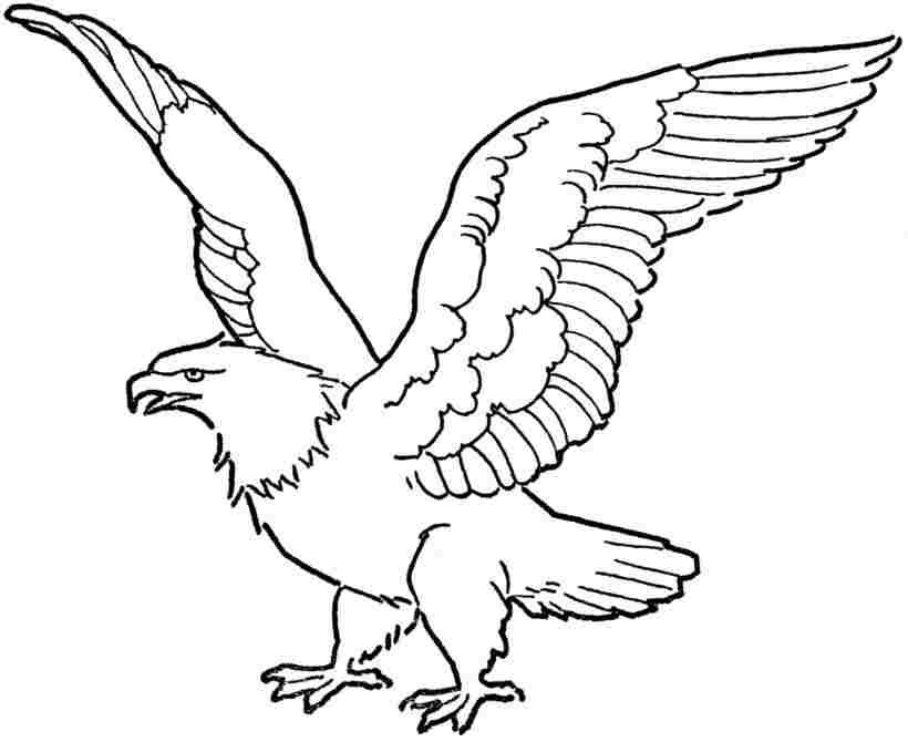 Eagle Printable In Eagle Coloring Pages Section Free