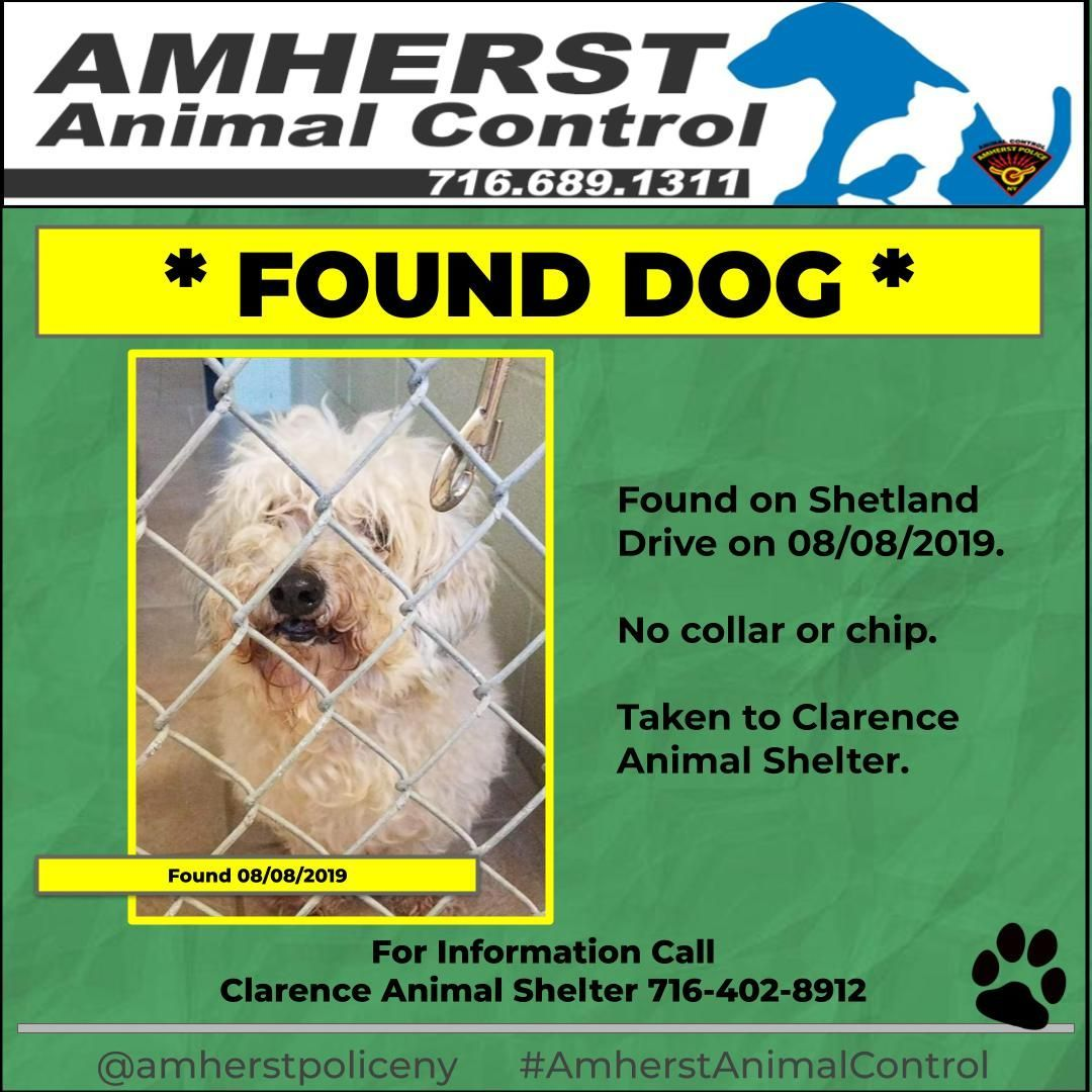 Amherst Animal Control This Dog Was Found On 08 08