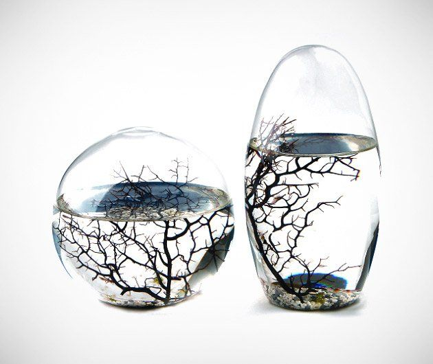 Ecosphere closed aquatic ecosystem eco regalos for Regalos originales hogar