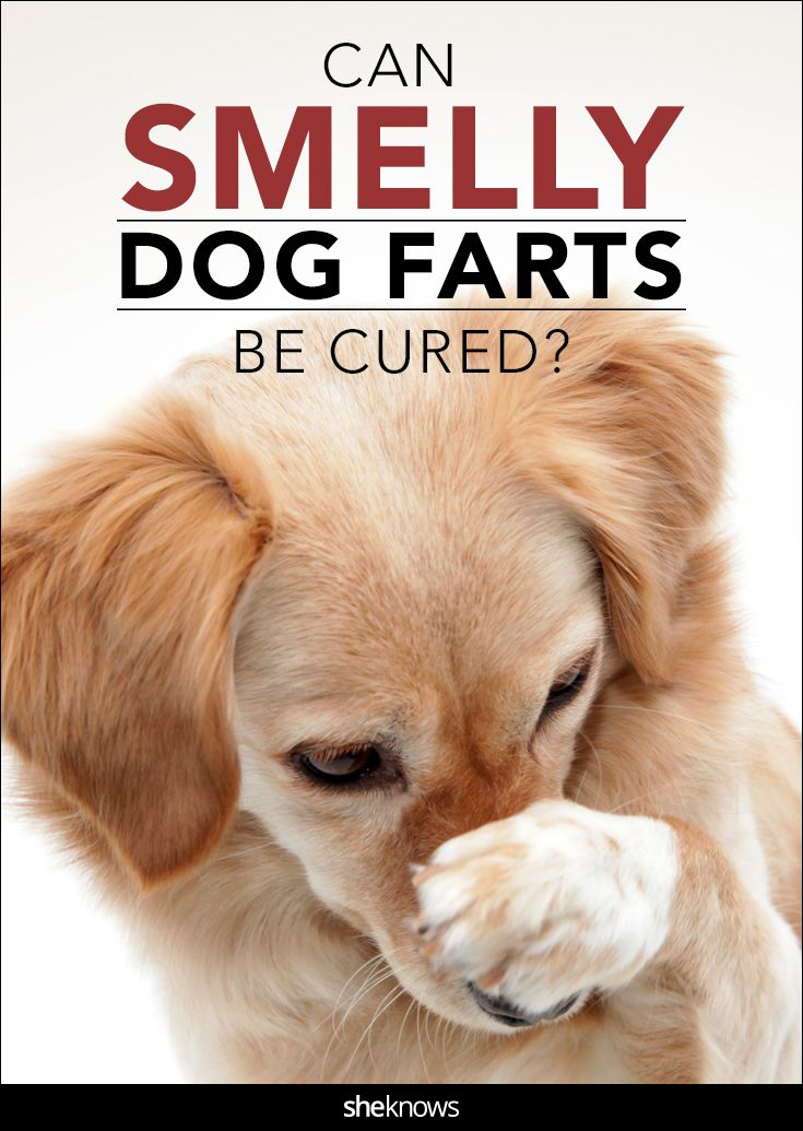 Here S Why Your Pooch S Poots Can Make Your Eyes Water Dog Farts