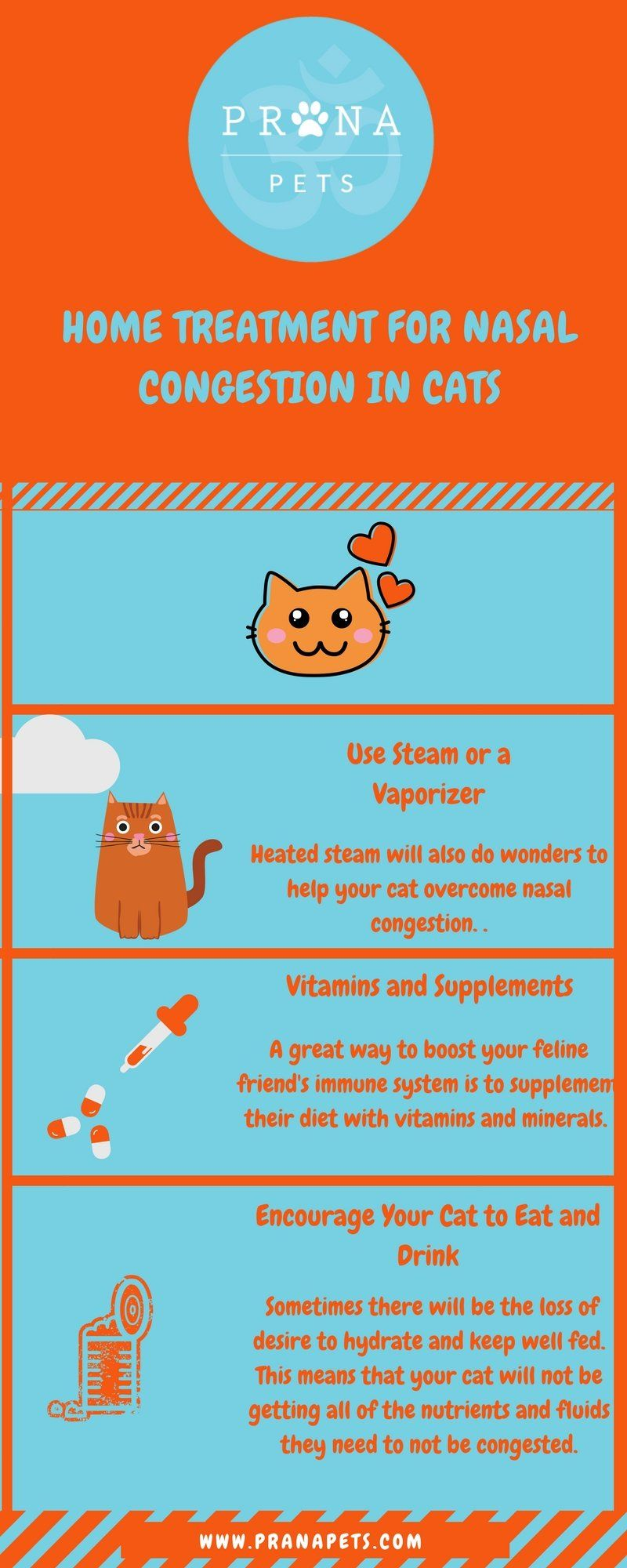Why Your Cat Keeps Sneezing But Seems Fine Nasal