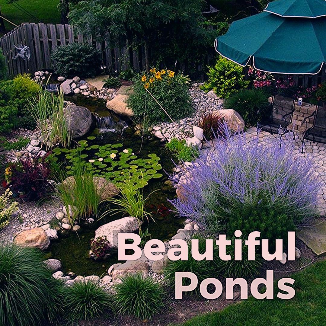 Beautiful Ponds Video