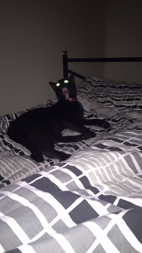 50 Pics Proving That Cats Are Actually Demons