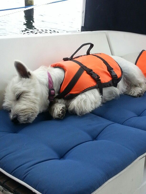Relax! It's boat-time