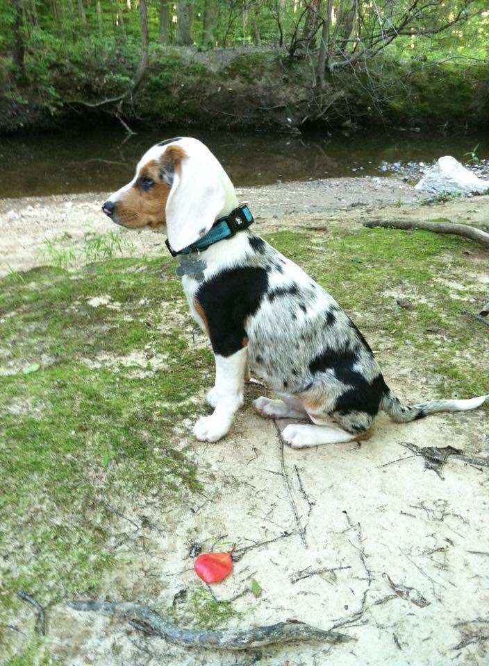 Pin On Daisy May Remi Dog