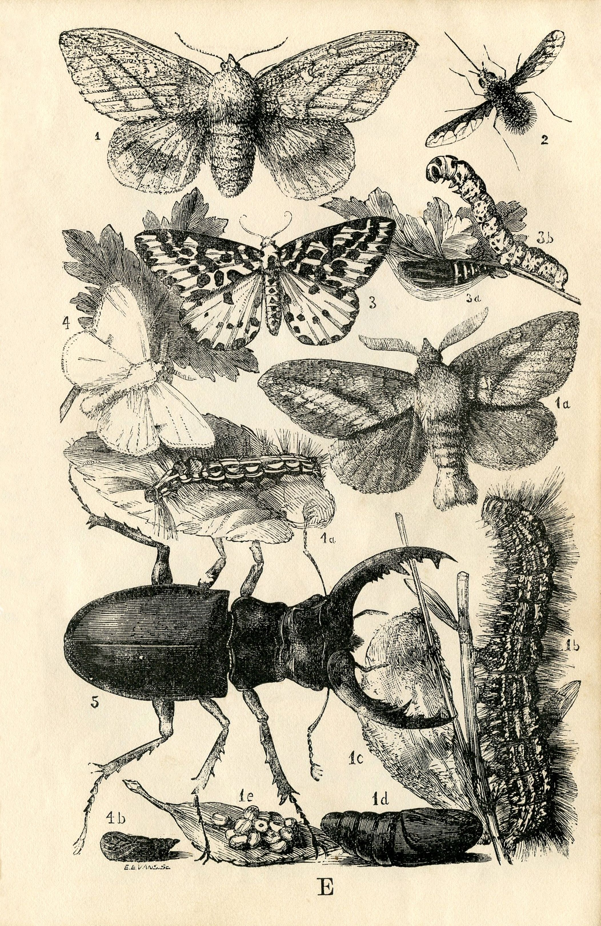 Gorgeous Free Art Vintage Insect Printables