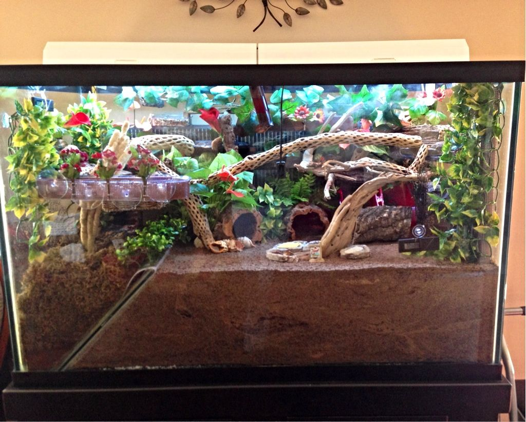 Hermit crab tank 10 gallon google search crabitat and for How much is a fish tank