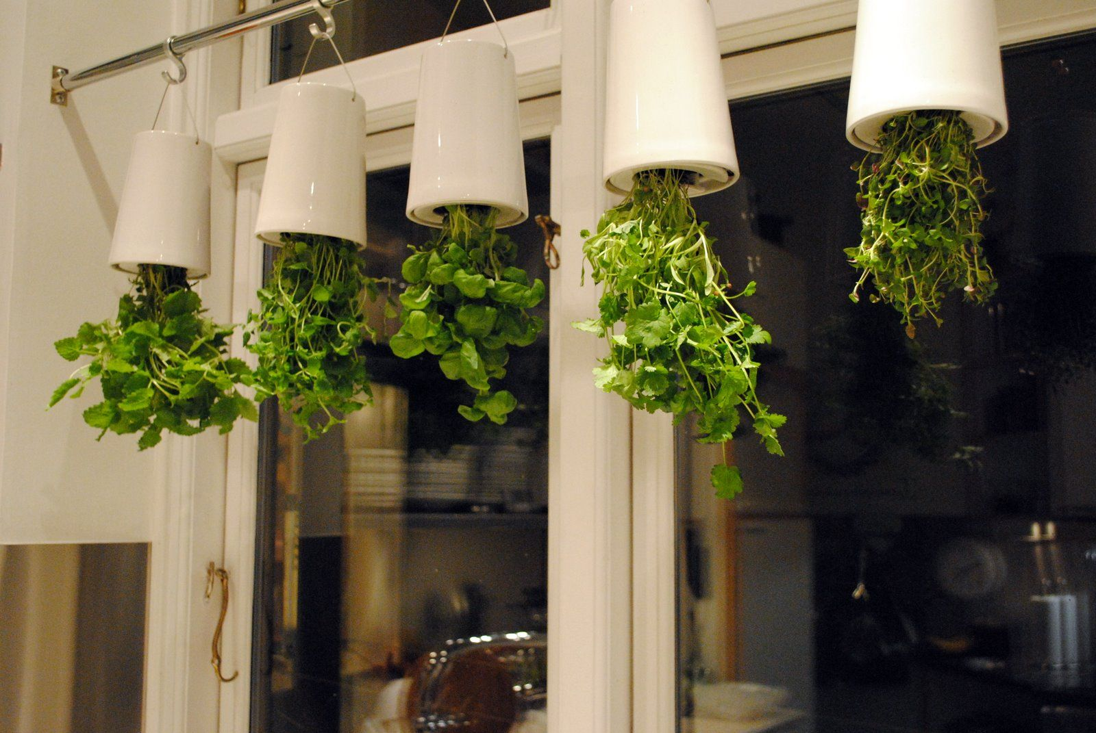 Hanging Indoor Herb Garden Upside Down Herb Garden In Front Of My Kitchen Window