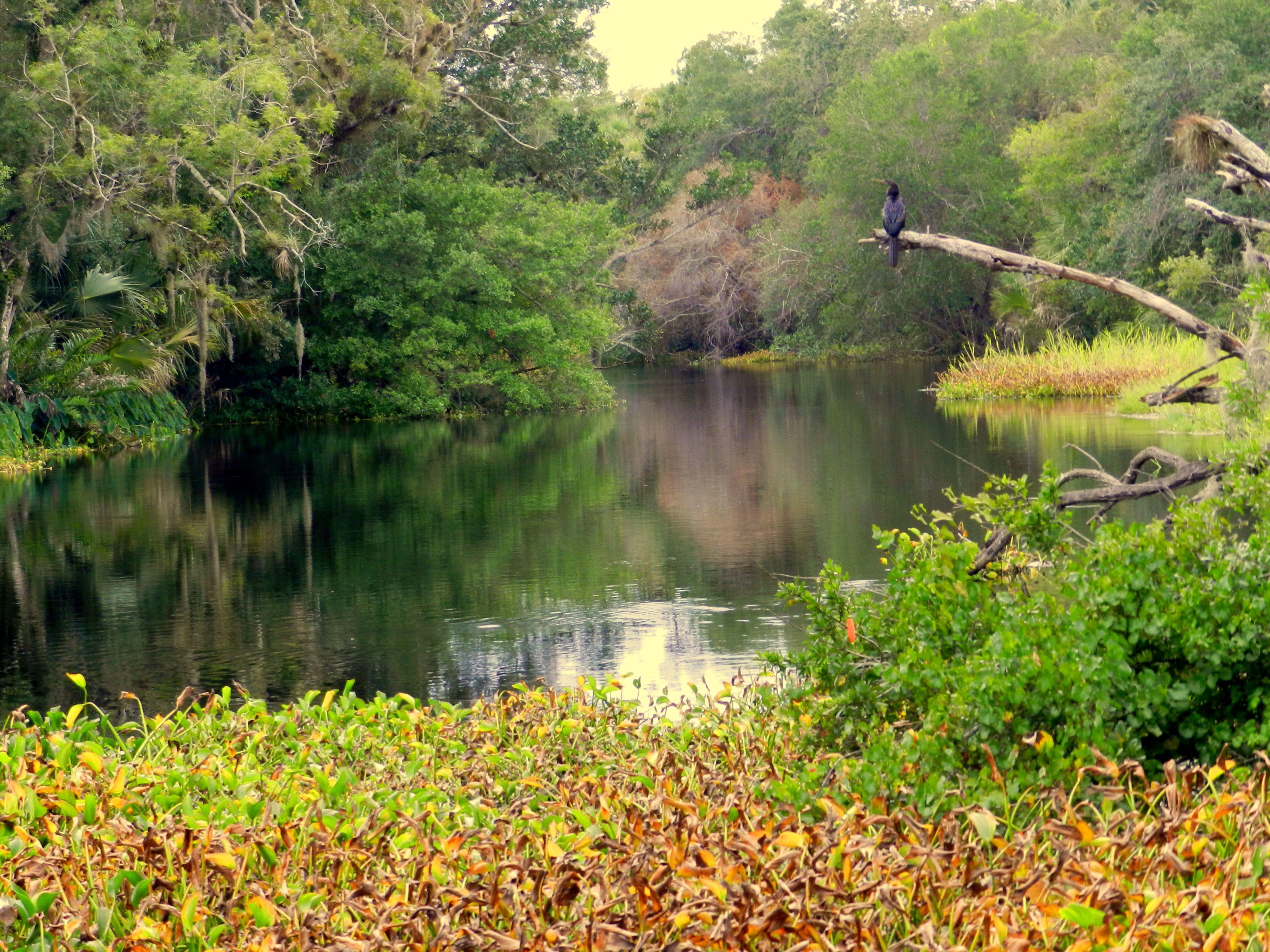 Bottlebrush tree - White City Park - Fort Pierce, FL - photo by ...