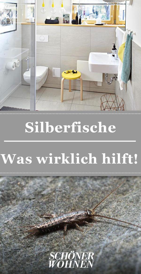 Silberfische – so bekämpfen Sie die Insekten | Silberfische ...
