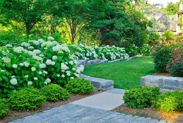 Hydrangea Heaven Traditional Landscape Shade Garden Design Boxwood Landscaping
