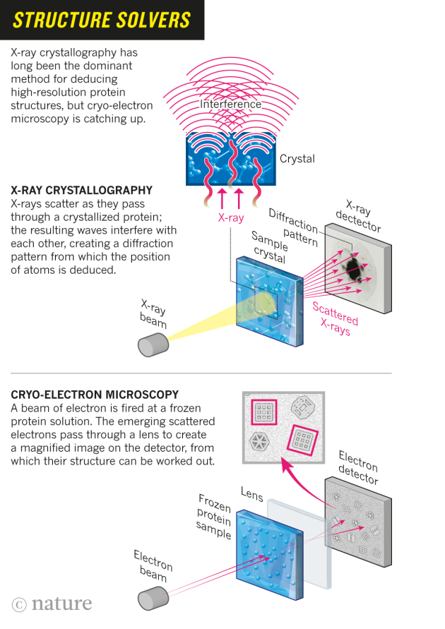Move over x ray crystallography cryo electron microscopy is kicking move over x ray crystallography cryo electron microscopy is kicking up a storm by revealing the hidden machinery of the cell ccuart Gallery