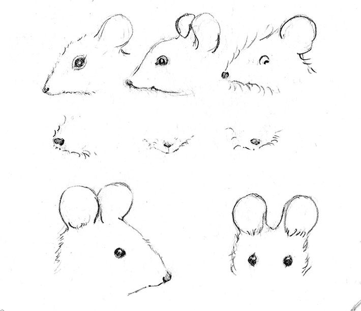 Drawing mouse eyes noses and ears