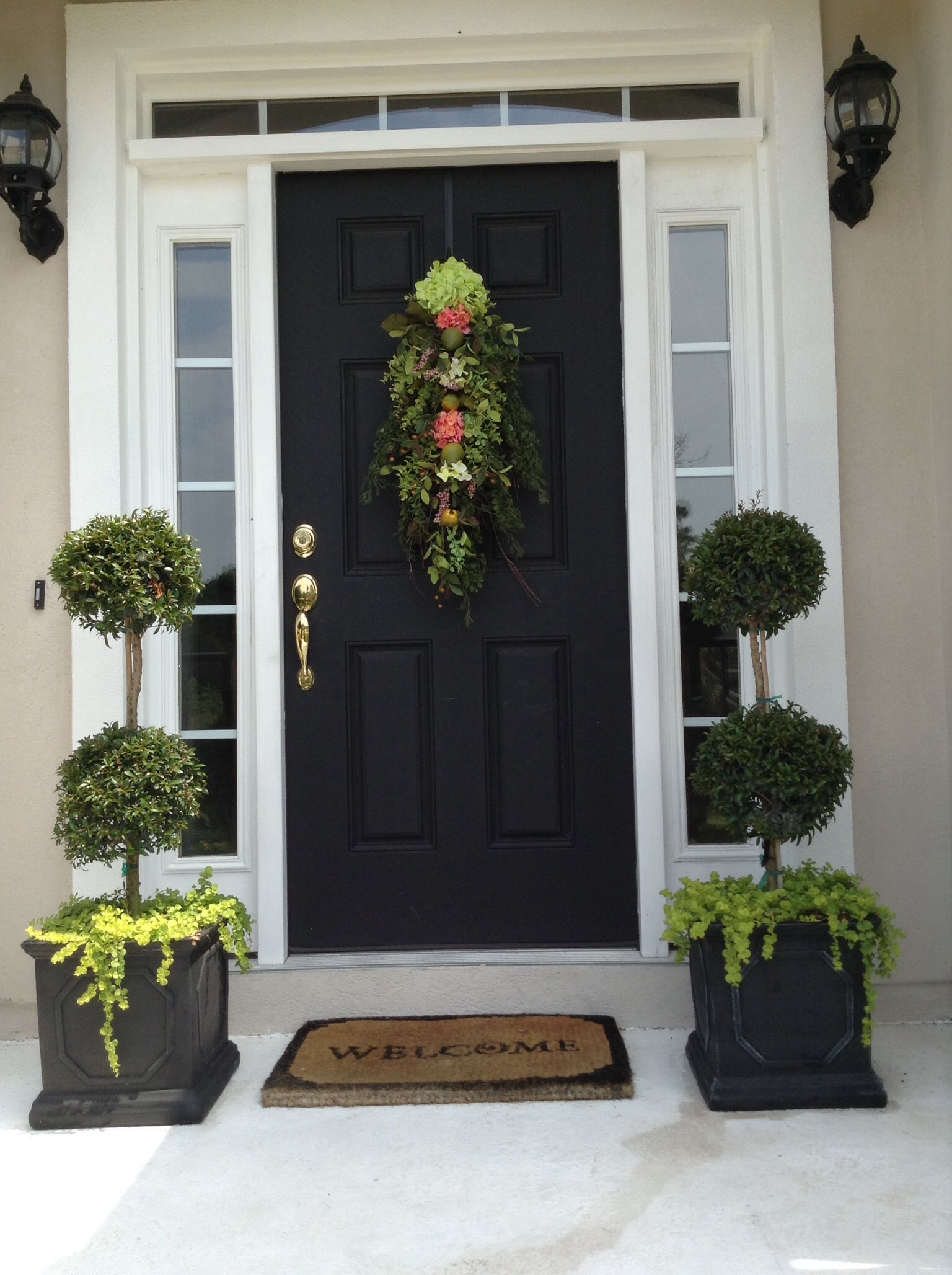 Topiary Eugenia with Creeping Jenny  Front yard landscaping