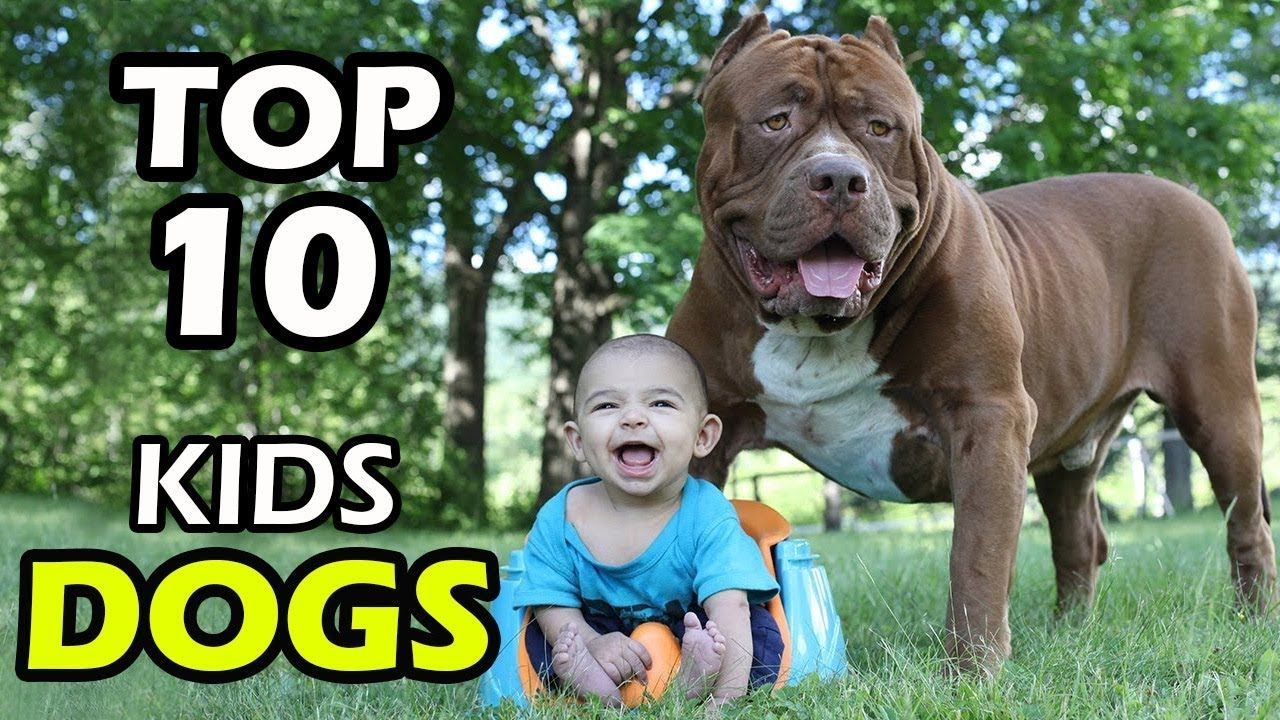Top 10 Best Small Dog Breeds For Kids Best Small Dogs Best